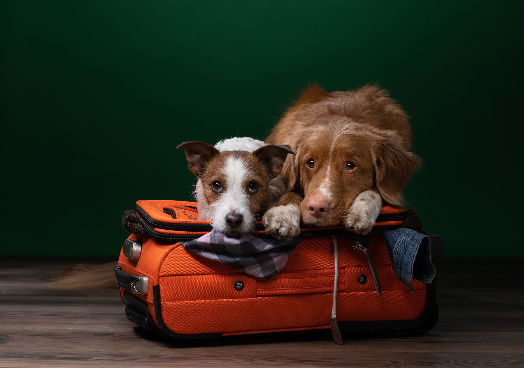 No Fly Zone: It's Time To Leave Your Fake Service Animal At Home