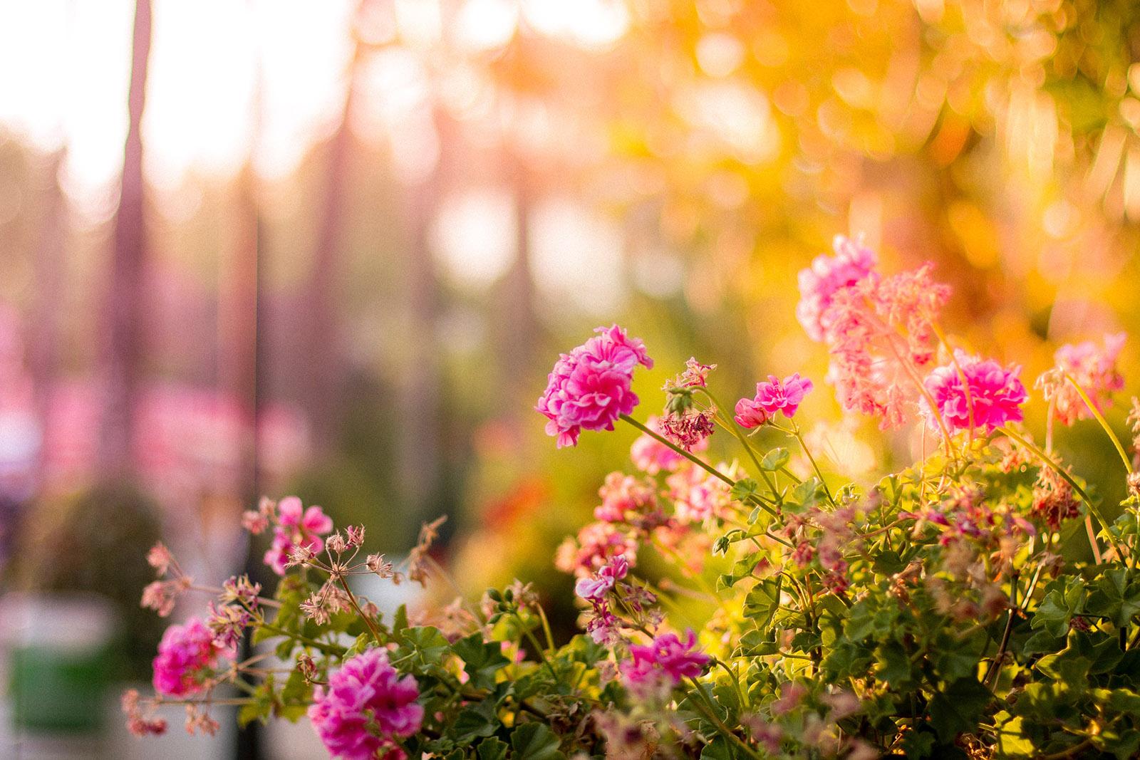 bloom-blossom-floral-17666